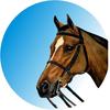 Horse Riding medal