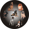 Dog Medal Centre Sticker